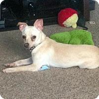 Adopt A Pet :: Yuki - Kamloops, BC