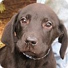 Adopt A Pet :: Albert