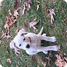 Adopt A Pet :: Caveira