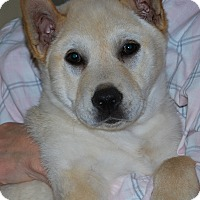 Adopt A Pet :: GOOSE - Portsmouth, NH