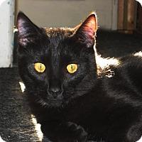 Adopt A Pet :: Sesam - Vancouver, BC