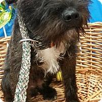 Adopt A Pet :: Horton - Decatur, AL