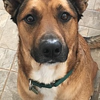 Shepherd (Unknown Type) Mix Dog for adoption in Taneytown, Maryland - Lucky