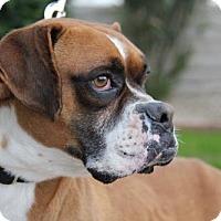 Adopt A Pet :: Jimmy - Phoenix, AZ
