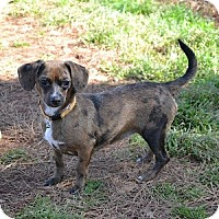 Adopt A Pet :: Chrissy - Athens, GA