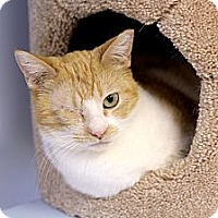Adopt A Pet :: Pilchard - Chicago, IL