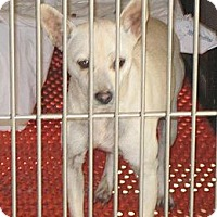 Adopt A Pet :: Honey - Linden, TN