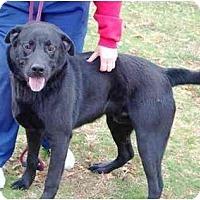 Adopt A Pet :: Mosko - kennebunkport, ME