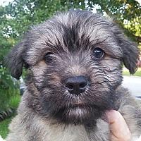 Adopt A Pet :: Mildred#3M - Orlando, FL