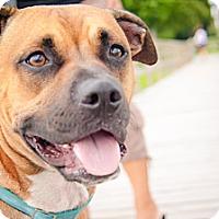 Adopt A Pet :: Cash - Sneads Ferry, NC