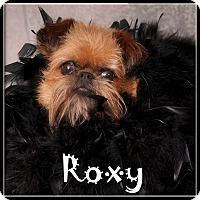 Adopt A Pet :: ROXANNE - ADOPTION PENDING - Seymour, MO