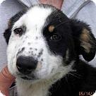 Adopt A Pet :: Bert