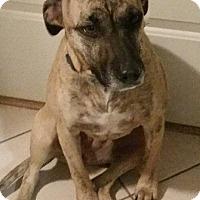 Adopt A Pet :: Carmela - Laingsburg, MI