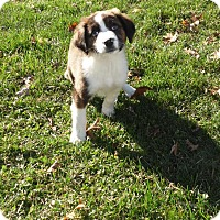 Adopt A Pet :: Edith - mooresville, IN