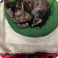 Adopt A Pet :: Peru - Simpsonville, SC