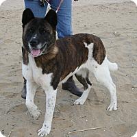 Adopt A Pet :: Reyka - Virginia Beach, VA