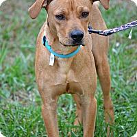 Adopt A Pet :: Hank - Albemarle, NC