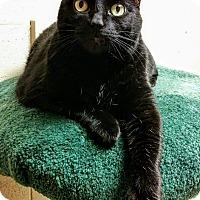 Adopt A Pet :: Asia - Saanichton, BC