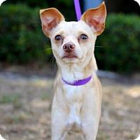 Adopt A Pet :: McKesson - San Diego, CA