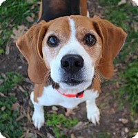 Adopt A Pet :: Knick - Austin, TX