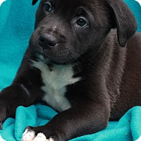 Adopt A Pet :: Washington - Waldorf, MD