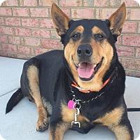 Adopt A Pet :: Poppy - Sneads Ferry, NC