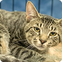 Adopt A Pet :: Timmy - Gainesville, FL