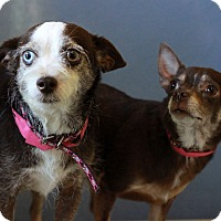 Adopt A Pet :: Thelma and Louise - Waldorf, MD