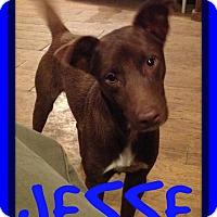 Adopt A Pet :: JESSE - Allentown, PA