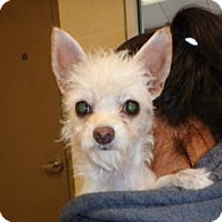 Adopt A Pet :: Scout #162374 - Apple Valley, CA