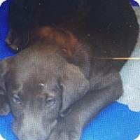 Adopt A Pet :: Charlie - Rochester, NH