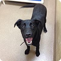 Adopt A Pet :: 1-6 Jake - Triadelphia, WV