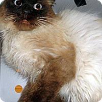 Adopt A Pet :: 334772 - Wildomar, CA