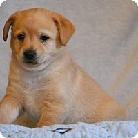 Adopt A Pet :: Elroy - Staunton, VA