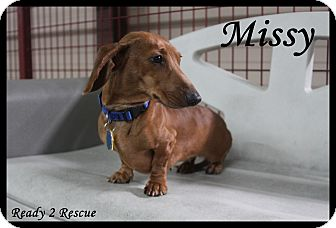 Dachshund Dog for adoption in Rockwall, Texas - Missy
