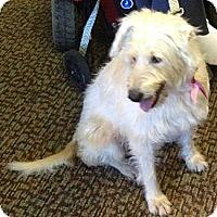 Adopt A Pet :: Maggie - Miami, FL