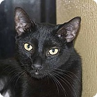 Adopt A Pet :: Raven - New Port Richey, FL