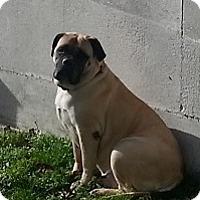 Adopt A Pet :: Cheyenne - Roy, WA