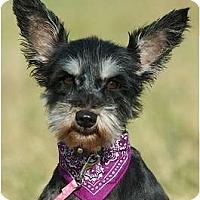 Adopt A Pet :: Jenda - Providence, RI