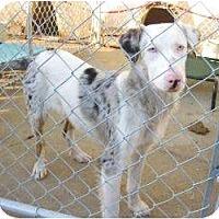 Adopt A Pet :: Jude - Richmond, VA