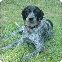 Adopt A Pet :: Carly - Mocksville, NC