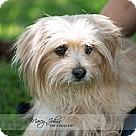 Adopt A Pet :: Karolina Kurkova