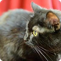 Adopt A Pet :: Valerie - Pekin, IL