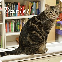 Adopt A Pet :: Daniel - Ocean City, NJ