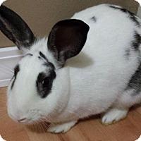 Adopt A Pet :: Tutu - Watauga, TX
