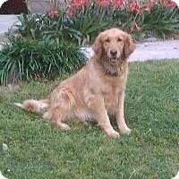 Adopt A Pet :: Bella IV - BIRMINGHAM, AL