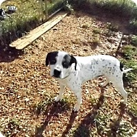 Adopt A Pet :: Petey Wood - Chatham, VA