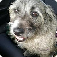 Adopt A Pet :: Maggie - Ocean Ridge, FL