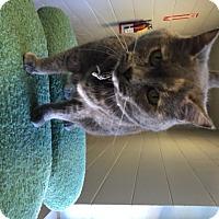 Adopt A Pet :: Lulu - Franklin, NC