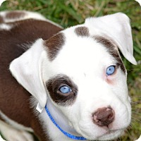 Adopt A Pet :: Jack - Albemarle, NC